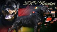 dkv-rottweilers-rottweiler-puppies-for-sale-business-card.jpg
