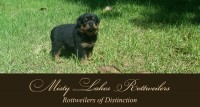 MistyLakesRotties-Header.JPG
