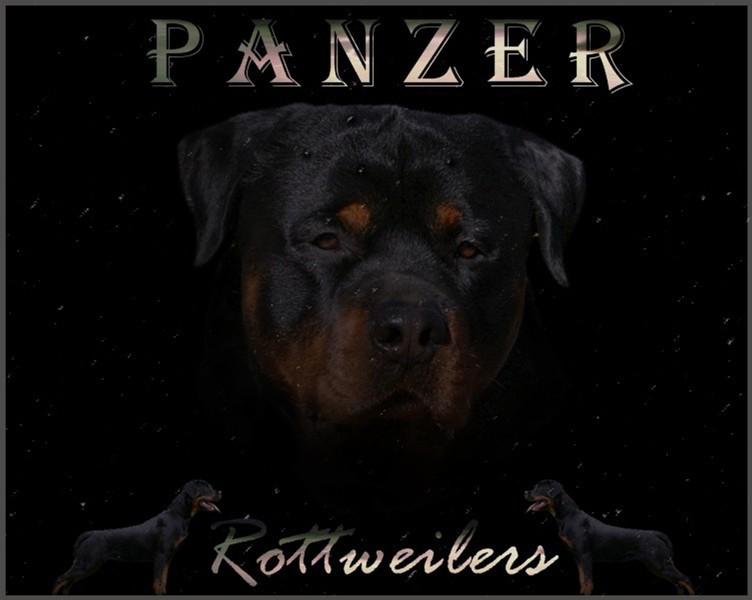 PanzerRottweilersEnter3.jpg