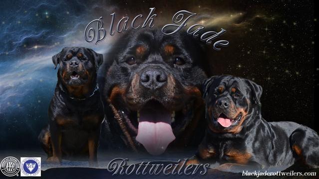 BlackJade (1).jpg
