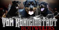 Vom Koniginstadt Rottweilers.png