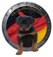 dkv-rottweilers-rottweiler-puppies-for-sale-dkv-rottweilers-logo-2.jpg