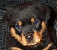 phoebe_puppy_face.jpg